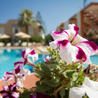 Hotel Peli (Kissamos, Kastelli, Crete) Pool 06